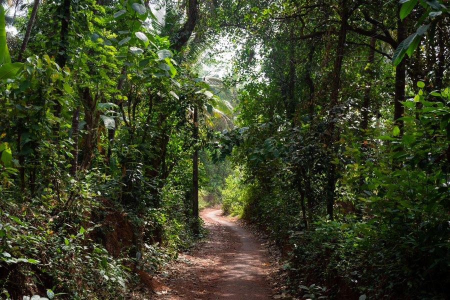 Village de Thottada, Kerala, Inde du sud