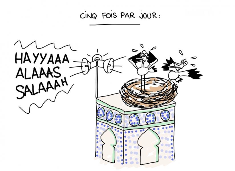 Dessin du lundi : Mais pourquoi donc les cigognes du Maroc choisissent-elles de s'installer sur les minarets ?