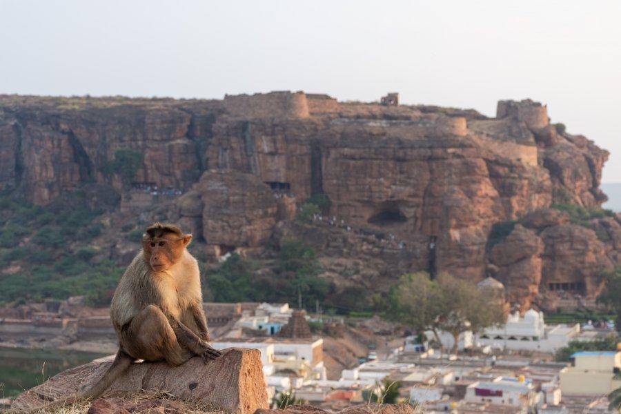 Singe à Badami, Inde
