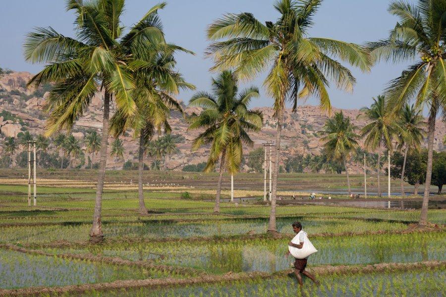 Indien dans les rizières d'Hampi