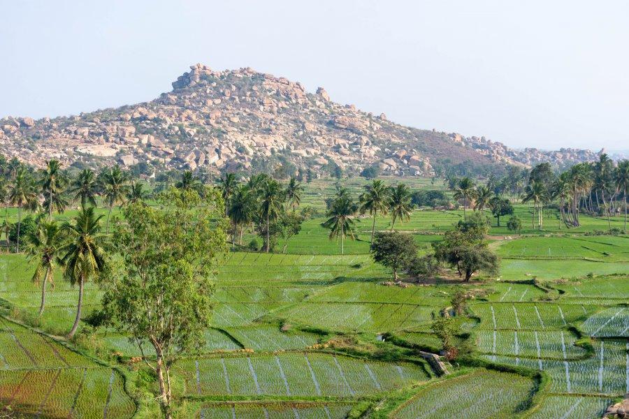 Rizières et rochers à Hampi, Inde