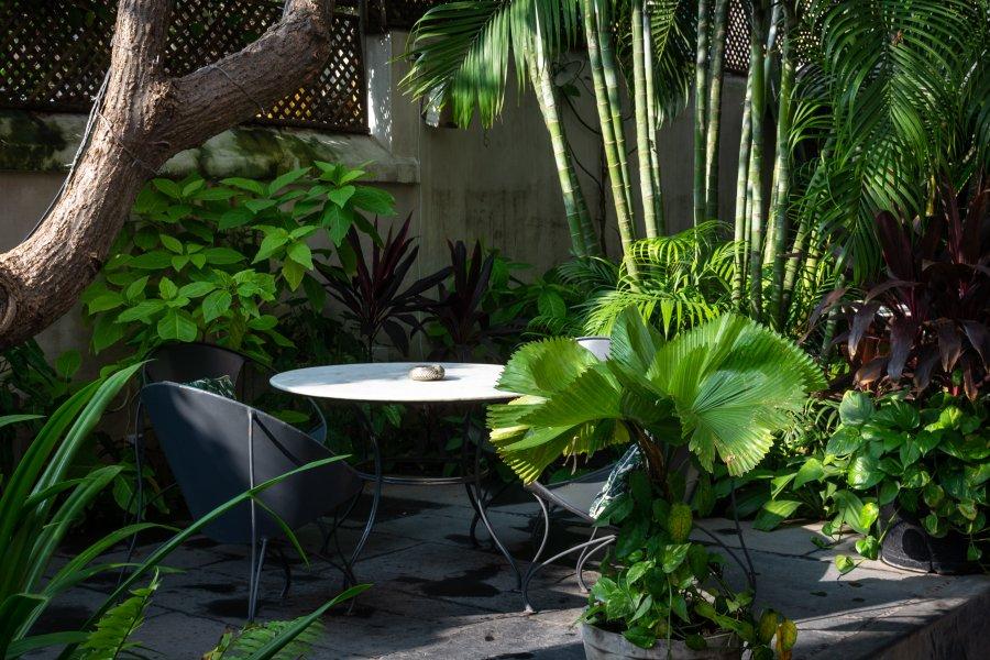 Resto et plantes à Pondichéry, Inde