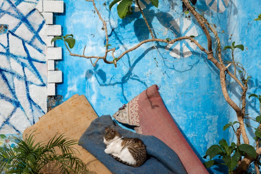 Sieste de chat à Tanger