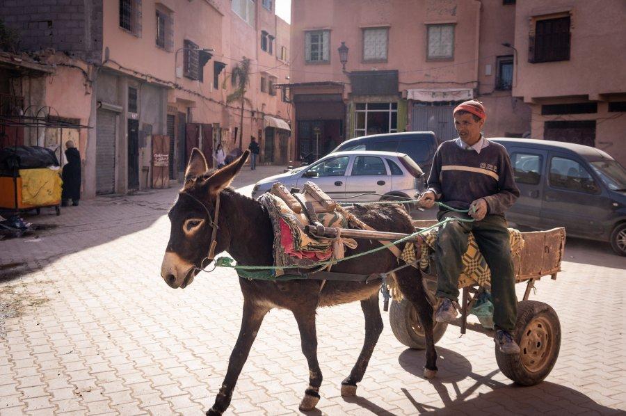 Âne dans une rue de Marrakech