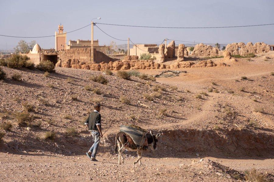 Âne marocain à Skoura