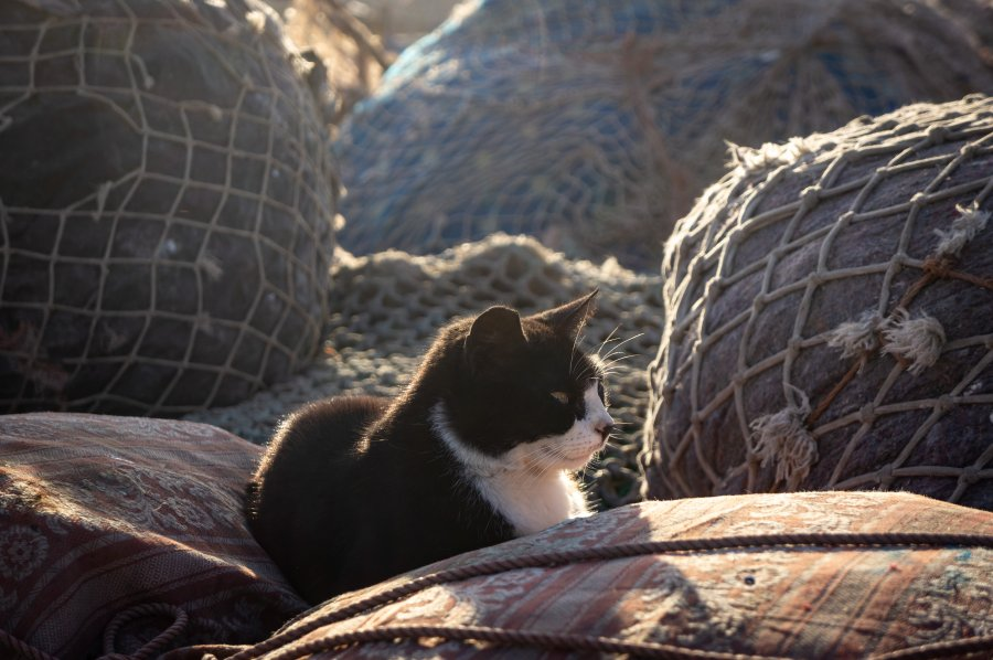 Chat dans les filets de pêche