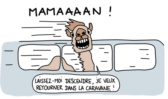 Dessin : dromadaire dans le nouveau TGV marocain