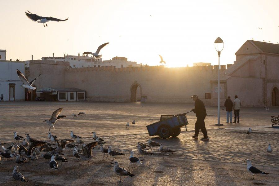 Mouettes dans la médina d'Essaouira