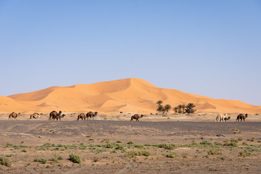 Désert du Sahara à Merzouga au Maroc