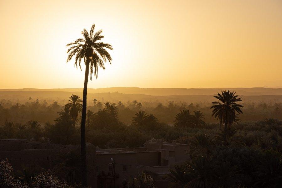 Palmeraie de Skoura au lever du soleil