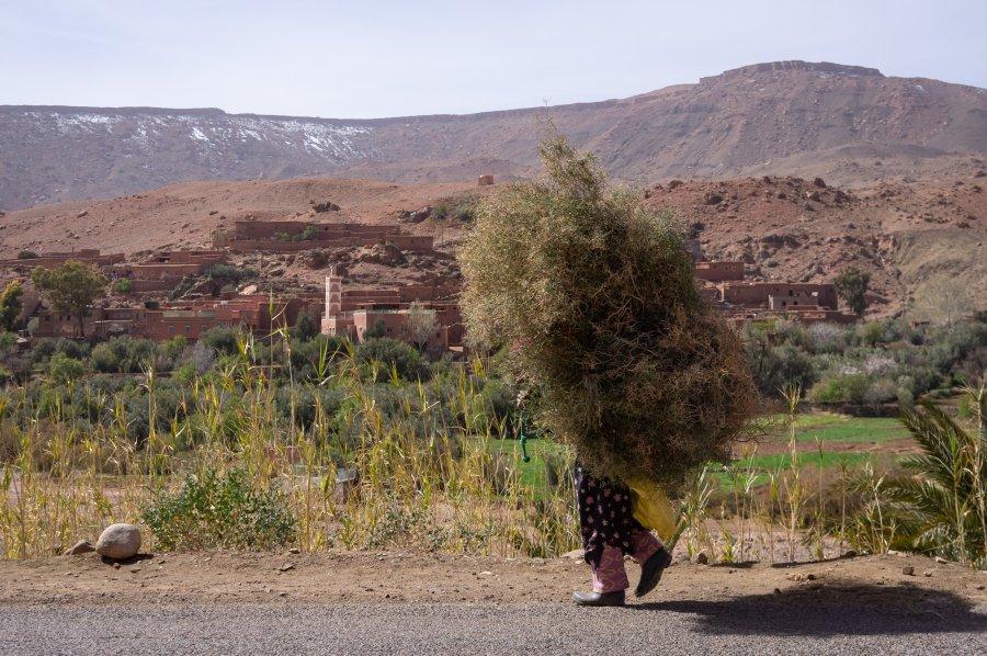 Travailleuse des champs au Maroc