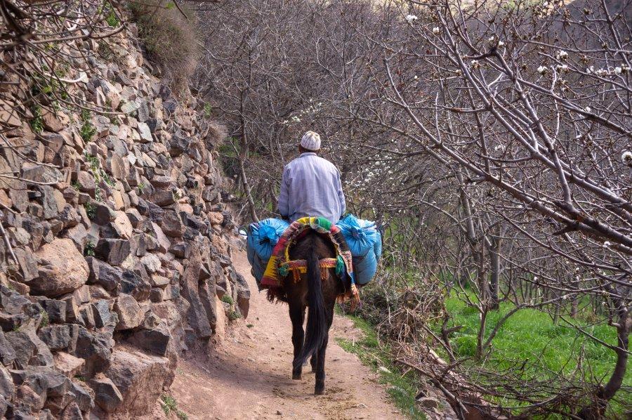 Marocain sur un âne à Imlil