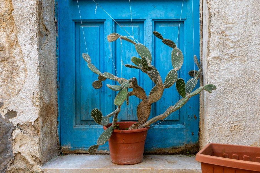 Cactus réparé