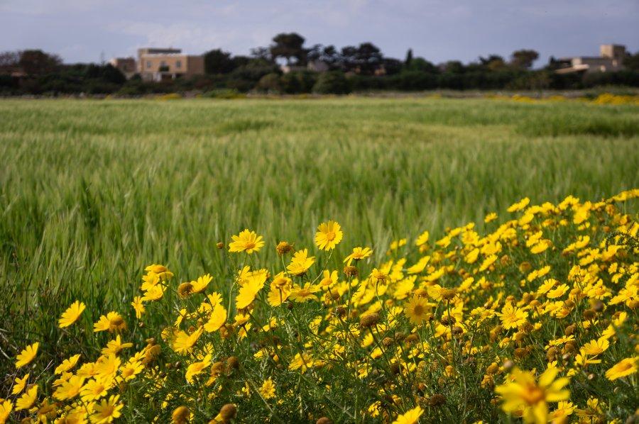 Fleurs sur l'île de Favignana