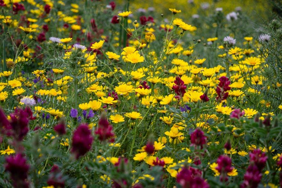 Fleurs du printemps en Sicile