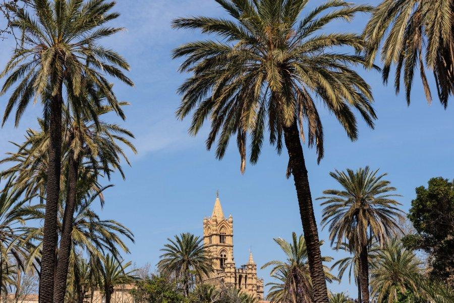 Palmiers et cathédrale de Palerme