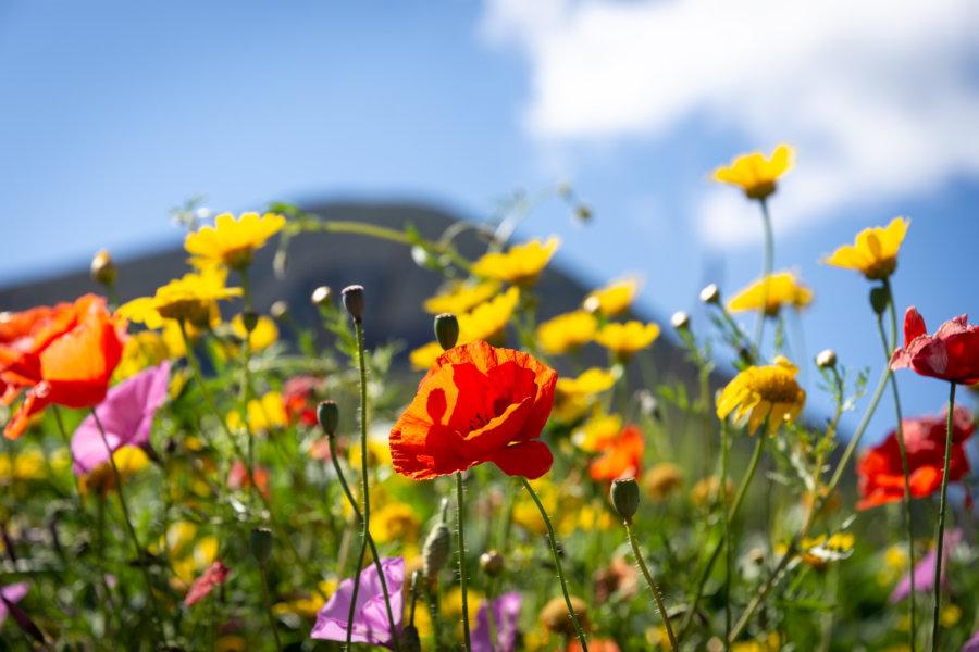 Fleurs sur les îles éoliennes, Sicile