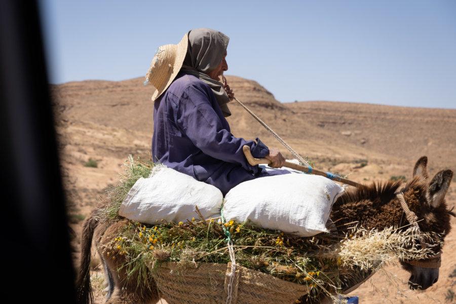 Âne sur le route au sud de la Tunisie