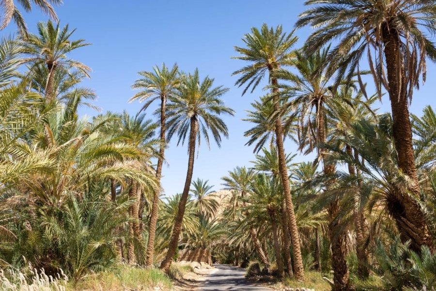 Palmeraie de Chebika à Tozeur, Tunisie