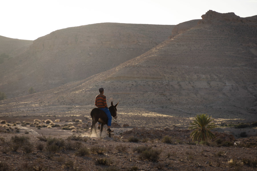 Tunisien sur un âne à Tataouine, Sud Tunisie