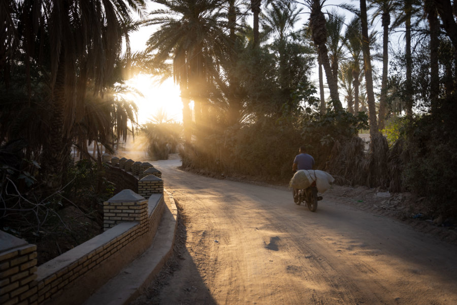 Palmeraie de Tozeur en Tunisie