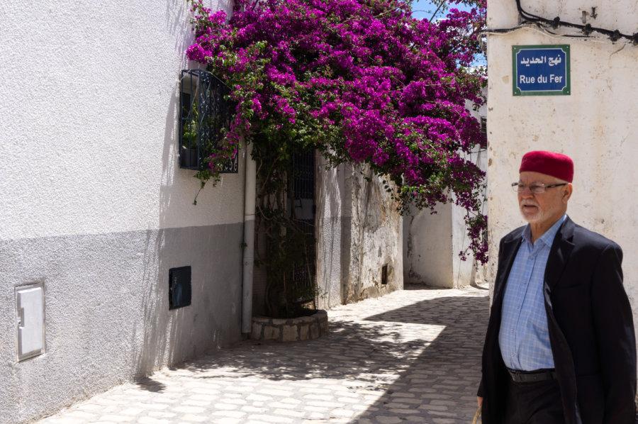 Bougainvilliers à Tunis