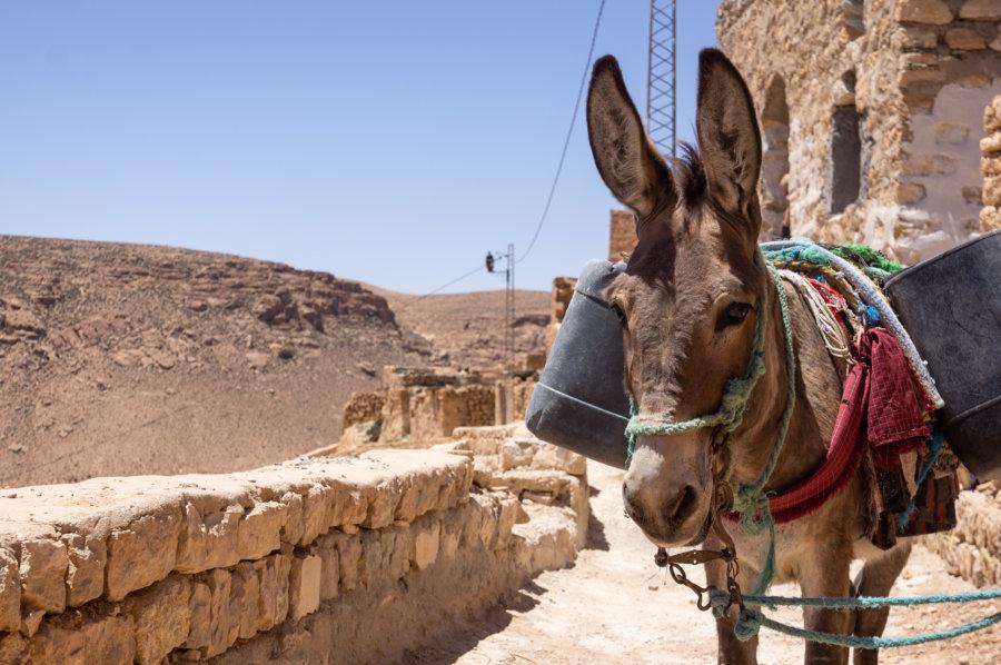 Âne dans le village de Chenini, Tunisie