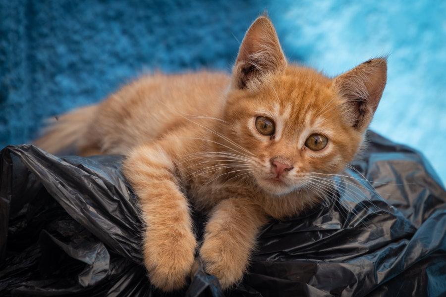 Chat sur une poubelle dans la médina de Bizerte