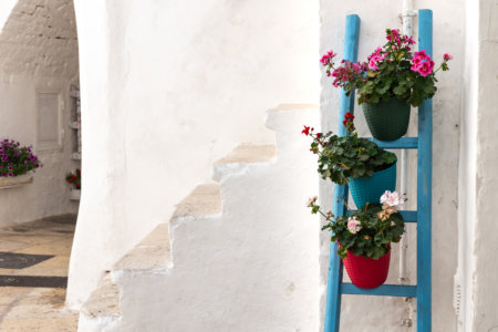 Fleurs à Cisternino, Pouilles, Italie