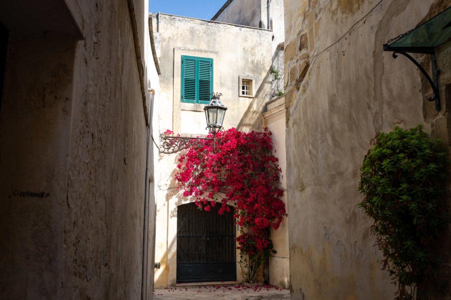 Maison et bougainvilliers à Lecce