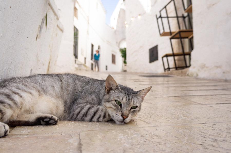 Chat dans la ville d'Ostuni en Italie