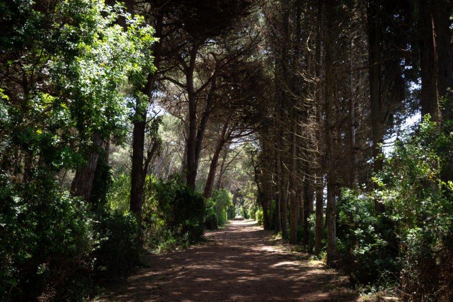 Randonnée dans la forêt, Salento, Italie