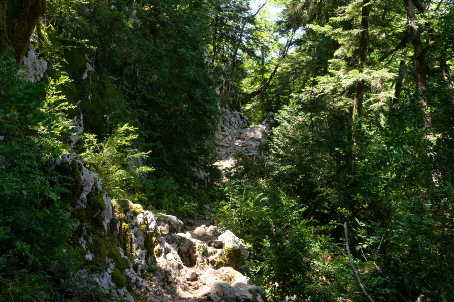 Chemin dans la forêt à Llogara en Albanie