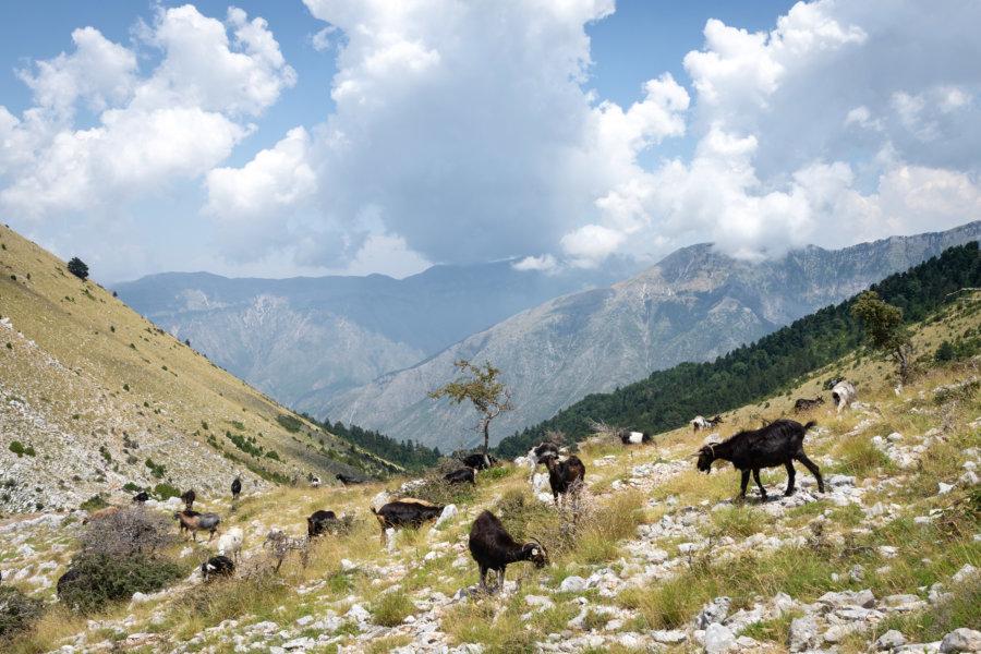 Montagnes albanaises à LLogara