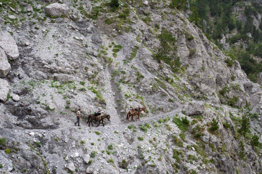 Chevaux dans la montagne albanaise