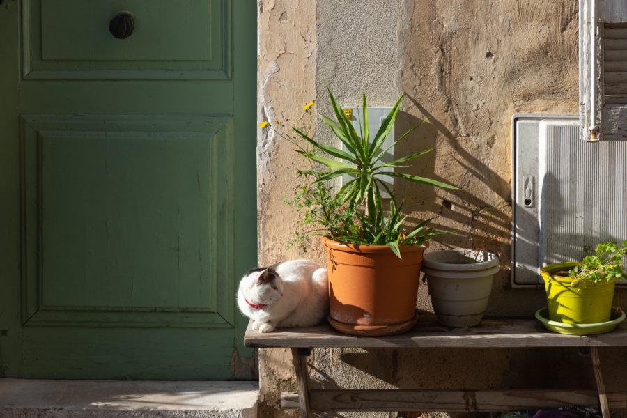 Chat et plantes sur un banc