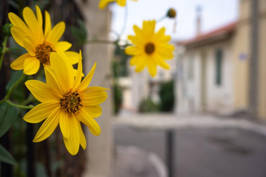 Fleur à Endoume, Marseille