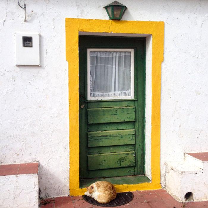 Chat et porte colorée