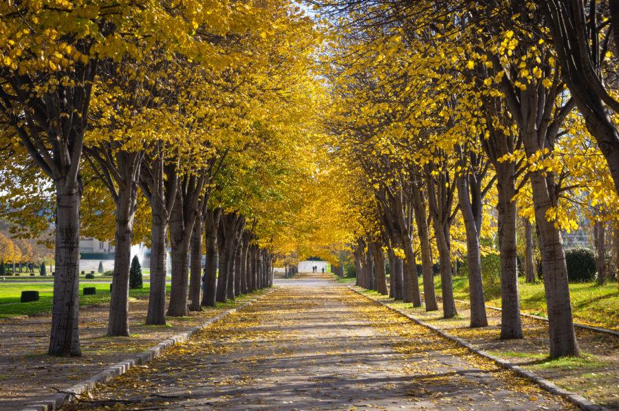 Parc Borély à l'automne