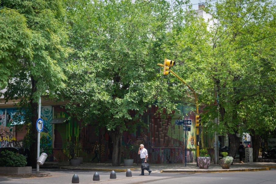 Arbres dans la ville de Mendoza