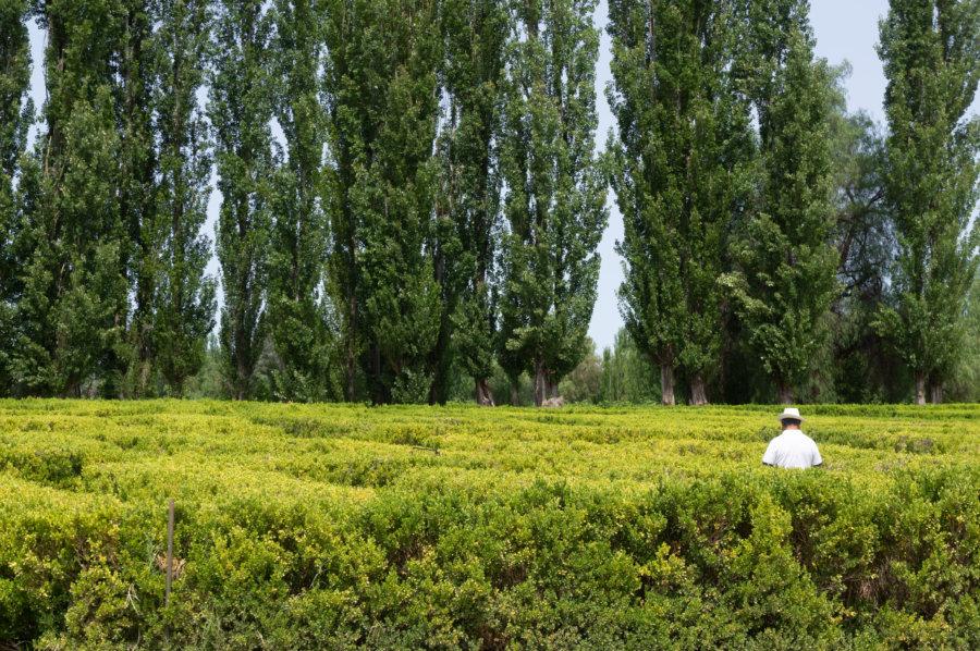 Labyrinthe de Borges à San Rafael