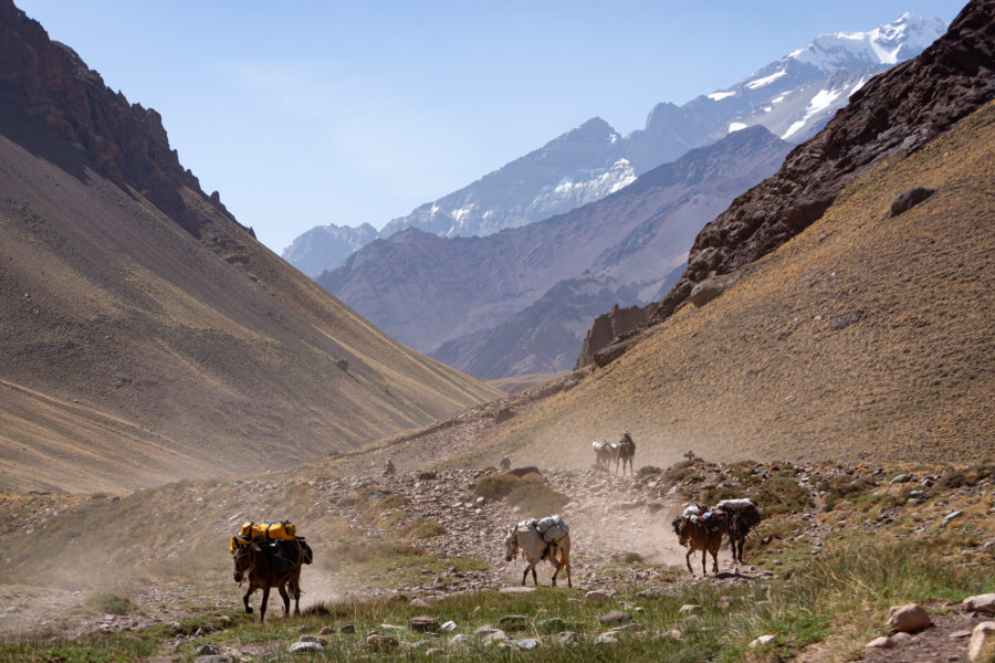 Chevaux sur la randonnée de l'Aconcagua