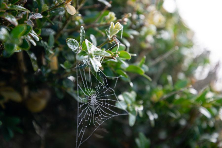Toile d'araignée le matin