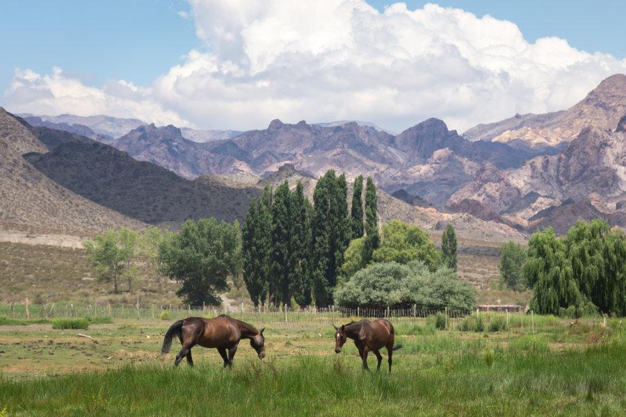 Chevaux dans la montagne à Uspallata, Argentine