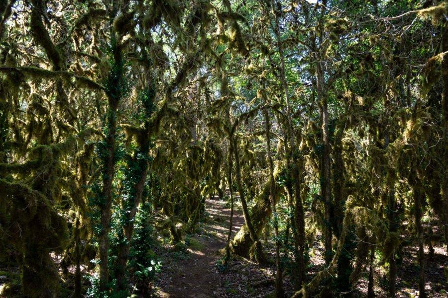 Arbres couverts de mousse, randonnée dans les Gorges de l'Aveyron