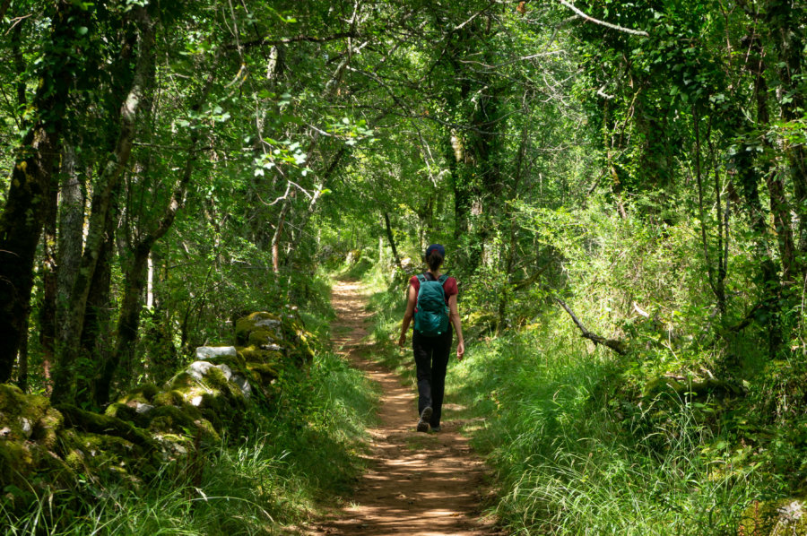 Randonnée dans les bois près de Bruniquel