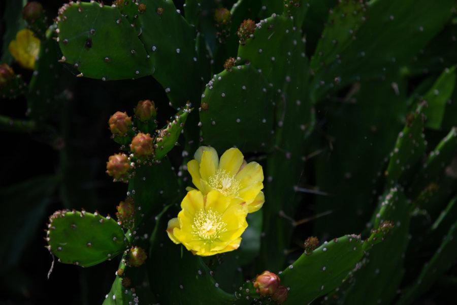 Cactus et fleur jaune