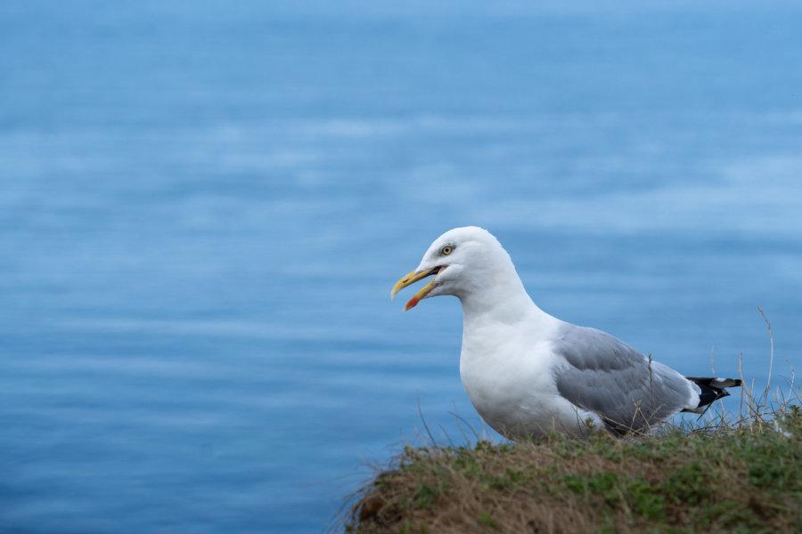 Goéland mécontent en bord de mer