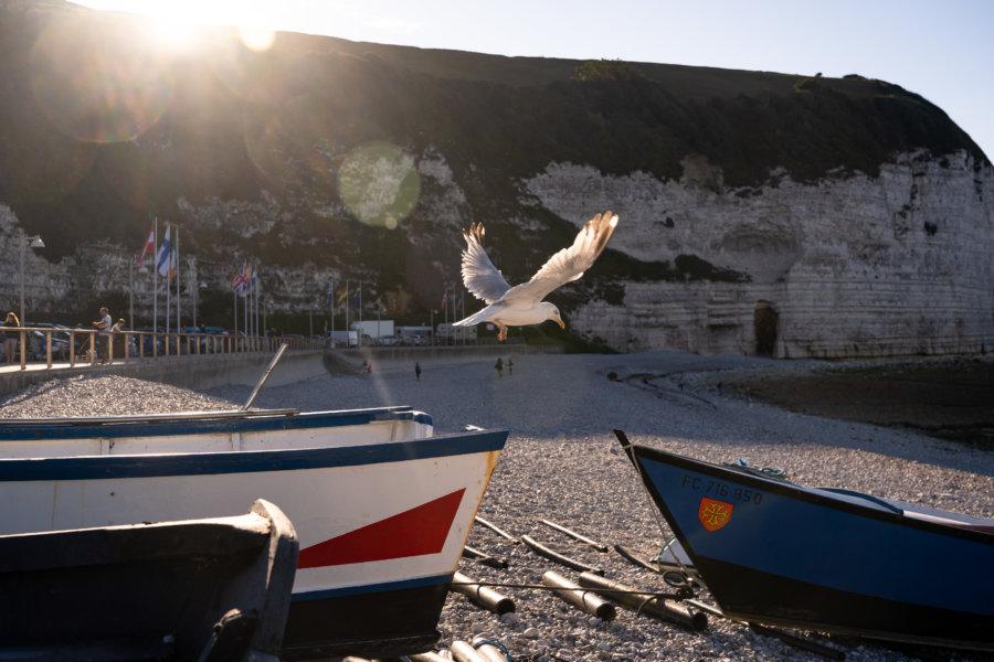 Goéland sur la plage d'Yport en Normandie