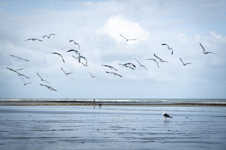 Goélands sur la plage de Quiberville et Sainte-Marguerite-sur-Mer